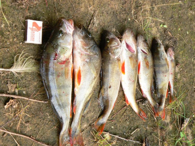 рыбалка на уломке