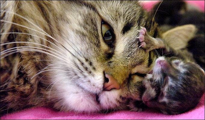 схема фото на 7 день котенок открыл глаза ВСХВ (Всесоюзная сельскохозяйственная