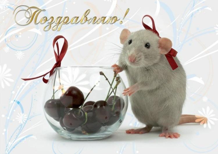 Открытка с днем рождения с мышами 60